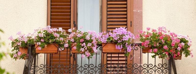 regalo-semillas-flores-dux